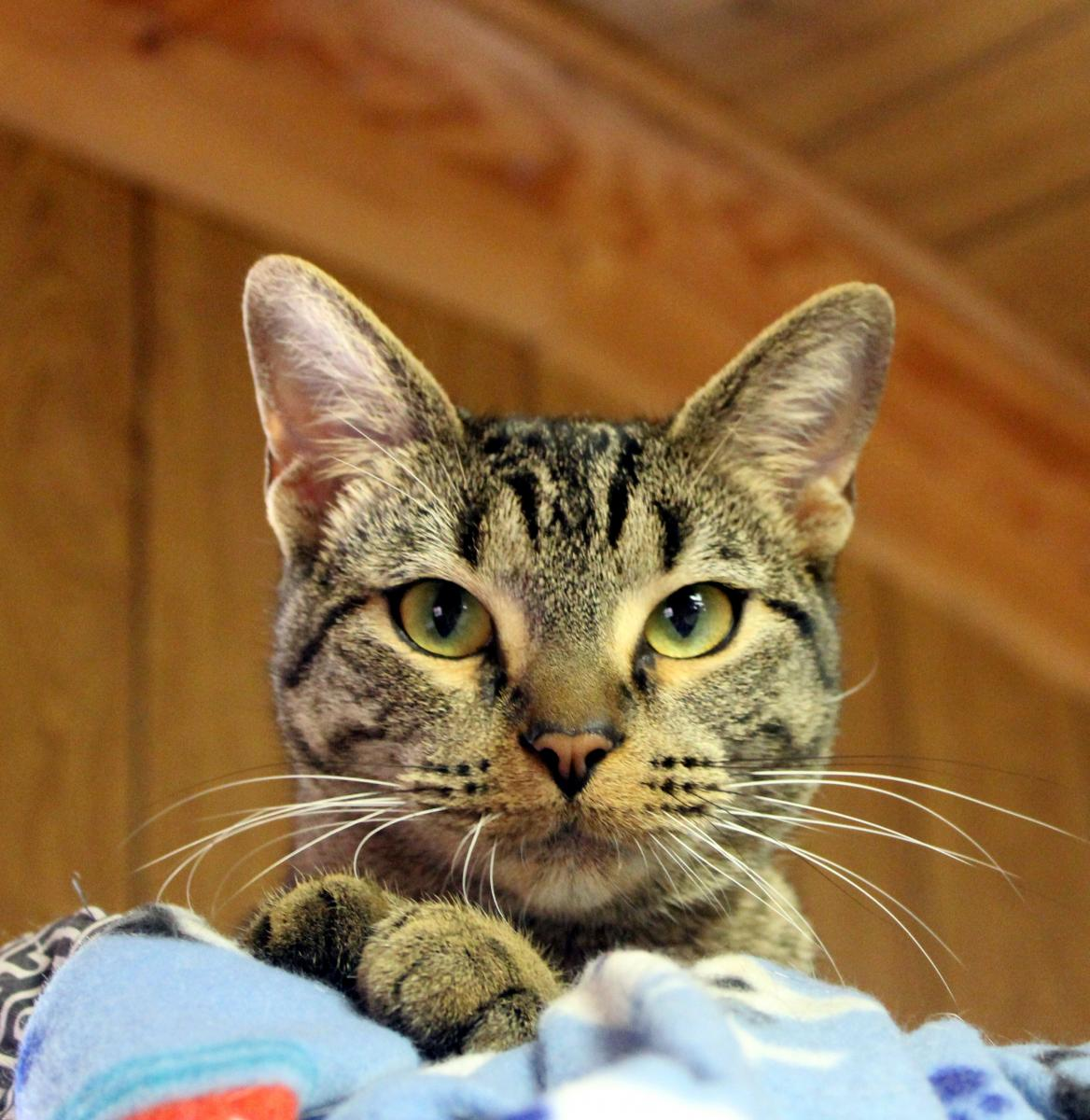 Madison City Webster Animal Shelter